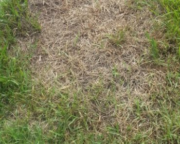 What's Wrong With My Plant ? (Root Rot, Sod Worms…)